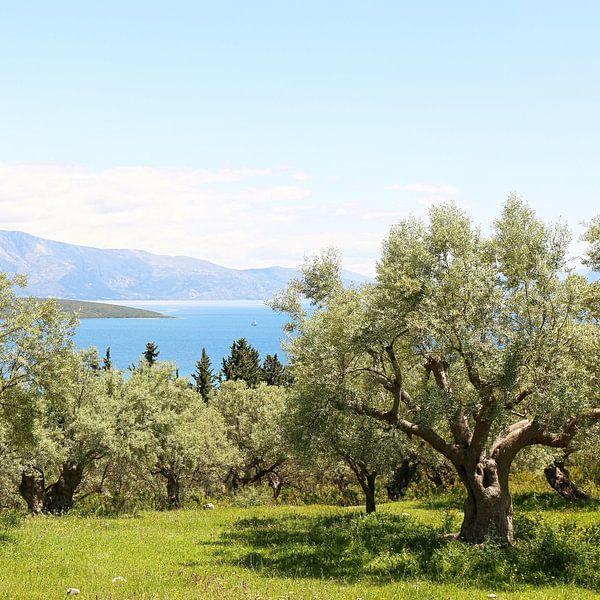 De olijfgaard met uitzicht op de Ionische zee van Shot it fotografie