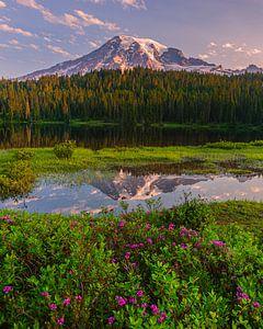 Zonsopkomst Mount Rainier, Washington State, Verenigde Staten
