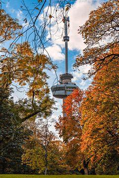 Herbst in Rotterdam von Midi010 Fotografie