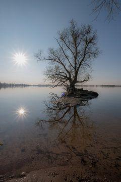 Spiegeling boom van Moetwil en van Dijk - Fotografie