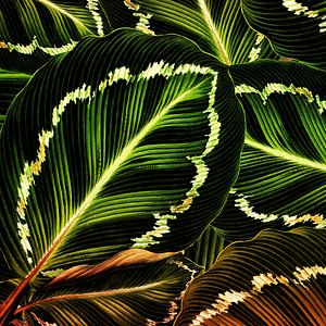 TROPICAL GREEN-GOLD LEAVES-1