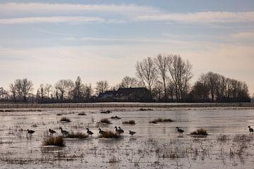 Enten watscheln auf dem Eis von Percy's fotografie