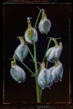 Oude Bloemen 7 van Henk Leijen