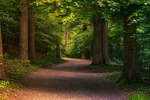 Wandelend door het bos van