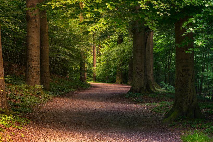Wandelend door het bos van Ronnie Westfoto
