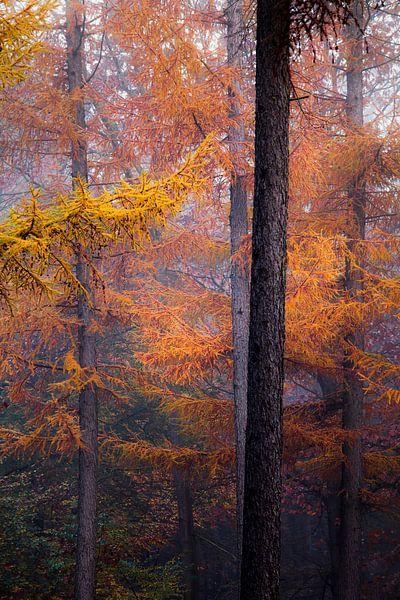 Herfstkleuren van Ton Drijfhamer