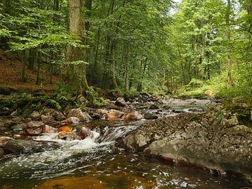 Kalte Bode River in the Harz Mountains van Jörg Hausmann