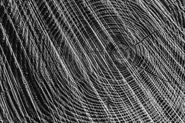 Boom zwart wit abstract, Regte Heide, Goirle. van Malou van Gorp