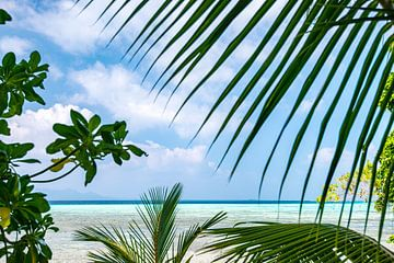 Tropischer Blick auf das Meer Salomonen von Ron van der Stappen