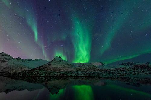 Noorderlicht of Aurora Borealis over de Lofoten eilanden in Noord-Noorwegen