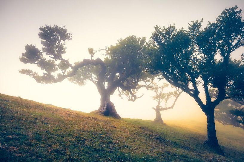 Fog Forest Fanal (Madeira / Portugal)  van Dirk Wiemer