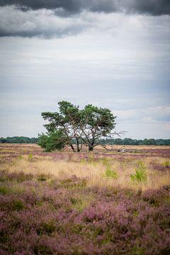 Eenzame boom van Fotografie Marco Houben