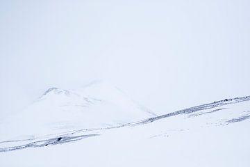 frozen von Wildpix imagery