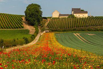 Geen Toscane maar gewoon Zuid-Limburg van John Kreukniet