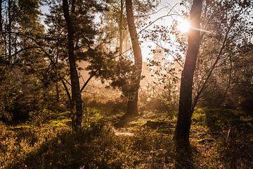 Zonnestralen in het bos von MICHEL WETTSTEIN