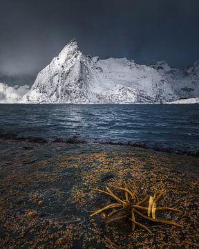 Fjord Lofoten von Peter Poppe