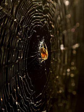 Spinne in ihrem Netz in goldenem Licht von Arina Keijzer