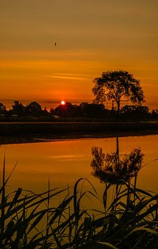 Zonsopkomst Natuurgebied Moerenburg Tilburg