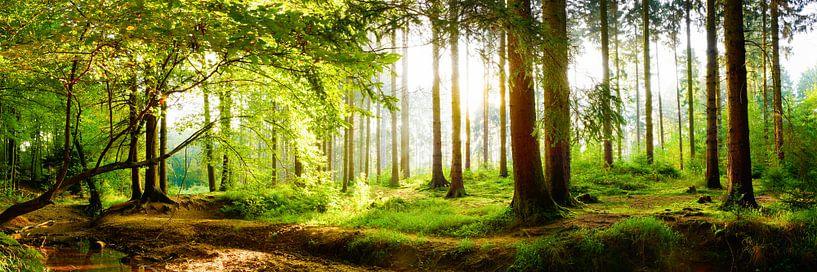 Idyllischer Wald bei Sonnenaufgang von Günter Albers