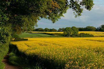 Koolzaad veld van Nancy van Verseveld