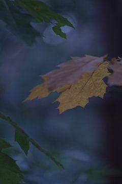 Herfst in de nacht, Vrachelse heide Oosterhout 26-9-2015 15.30 uur zon 1/320 sec  -2 stop f/4 ISO-40 van Ad Huijben