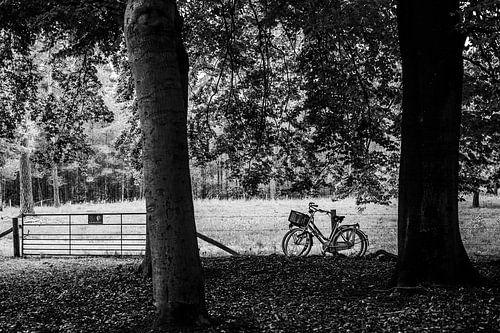 Twee geparkeerde fietsen in het bos, fotoprint