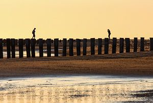 Lopen op strandpalen van Koen Mol