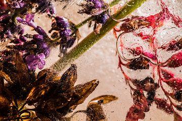 IJsbloemen 2 van Wim Roebroek
