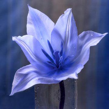 Blue Tulips in Vaas van Christine Nöhmeier
