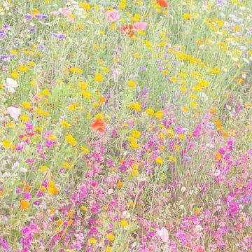 Het wilde Bloemenveld van Martin Bergsma
