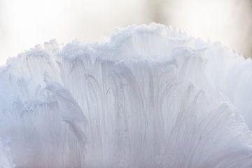 De baard van Koning Winter van Danny Slijfer Natuurfotografie