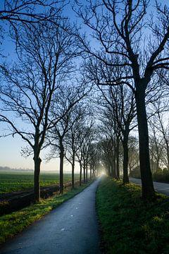 Allee der Winterbäume von Willian Goedhart