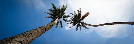 Tropisch uitzicht van Chantal Nederstigt