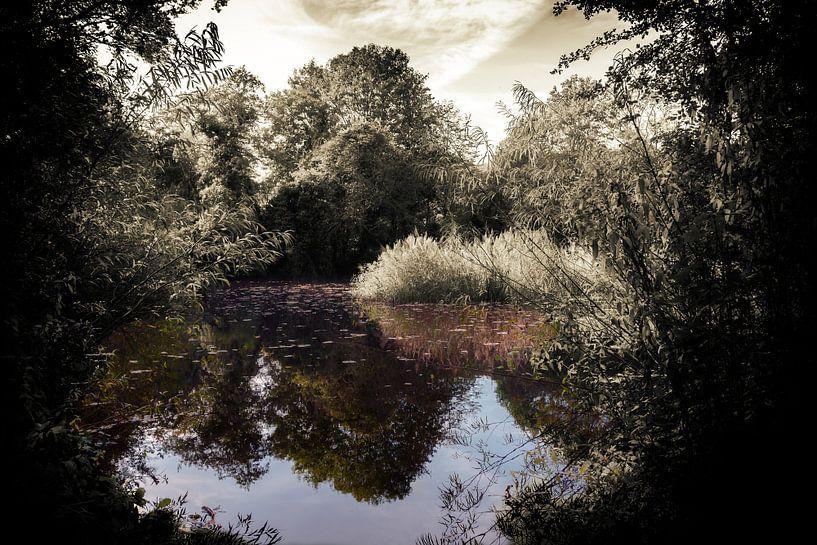 De vijver van natuurpark Bloeyendael van Jan van der Knaap