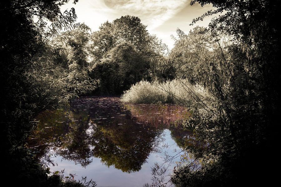 Natuurpark Bloeyendael en de vijver