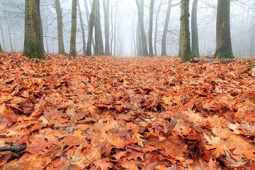 Bladerdek in de herfst van