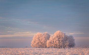 Winter in het Dwingelderveld van Tony Ruiter