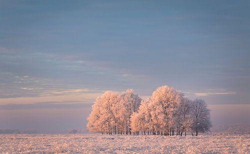 Winter in het Dwingelderveld van