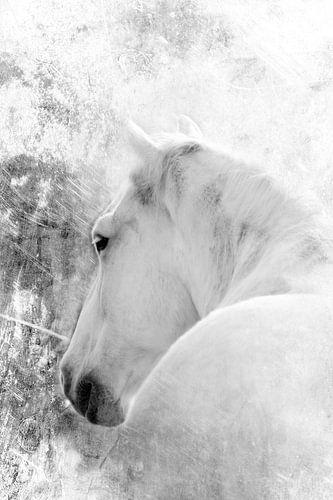 WHITE HORSE - BLACK AND WHITE