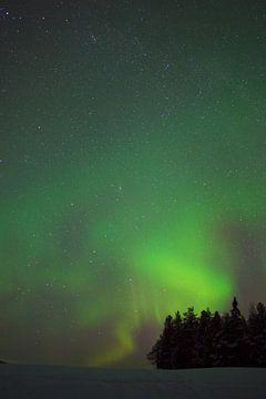Noorderlicht in zweeds Lapland van Arnold van Rooij