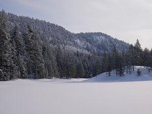Noorse besneeuwd landschap van