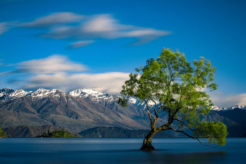 The Lonely Tree of Wanaka - Lake Wanaka, Nieuw-Zeeland van Martijn Smeets