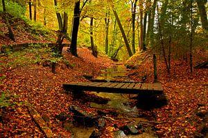 Een bos in herfstsfeer word opgesplitst door een klein beekje met een oud bruggetje van