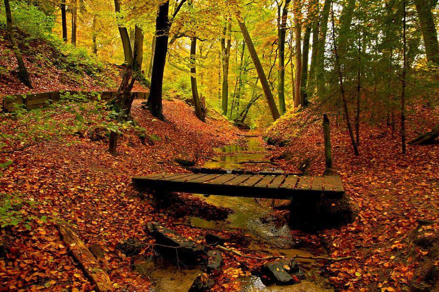 Een bos in herfstsfeer word opgesplitst door een klein beekje met een oud bruggetje