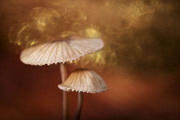 Magie in het bos van Karin de Jonge