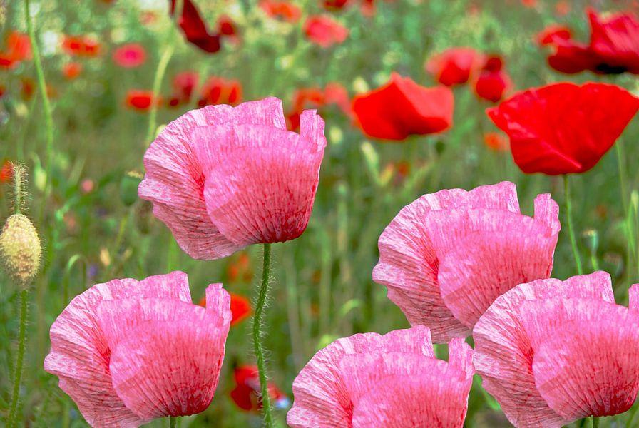 Roze en rode klaprozen (poppies) van Tineke Visscher