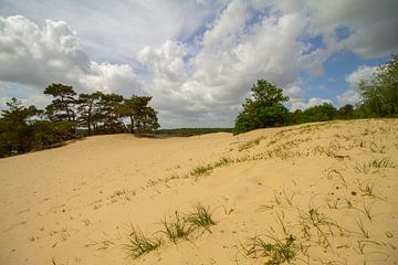 Zandduin en bomen met een bewolkte lucht in het voorjaar van Marco Leeggangers