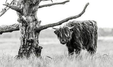 Schotse hooglander 8 van Jan Peter Nagel