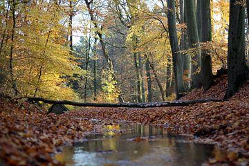 Herfstige boswandeling, Oosterbeek, Nederland van Ingrid Meuleman