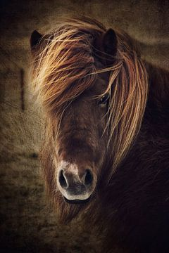 Schitterend paard van Angela Dölling